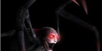 Spider Crawler