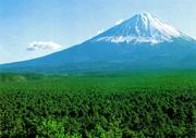 Aokigahara fuji