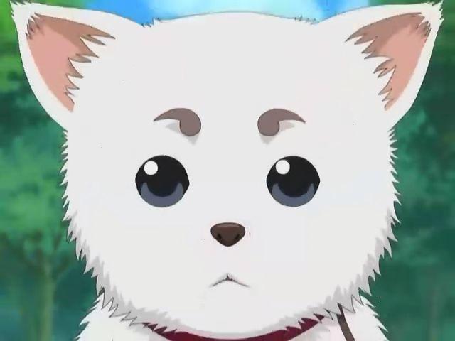 Cute Kawaii Eyes Dog