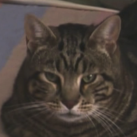 File:LordTubbingtonIcon.png