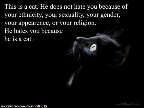 File:Catshateme.jpg