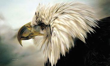 File:1177 Immature Bald Eagle.jpg
