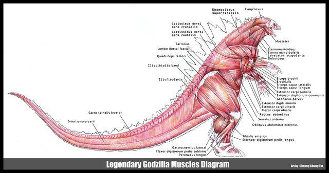 File:Godzilla musclesimage.jpeg