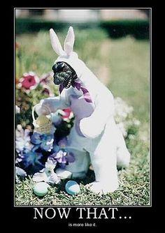 File:Bunnyzillaimage.jpeg