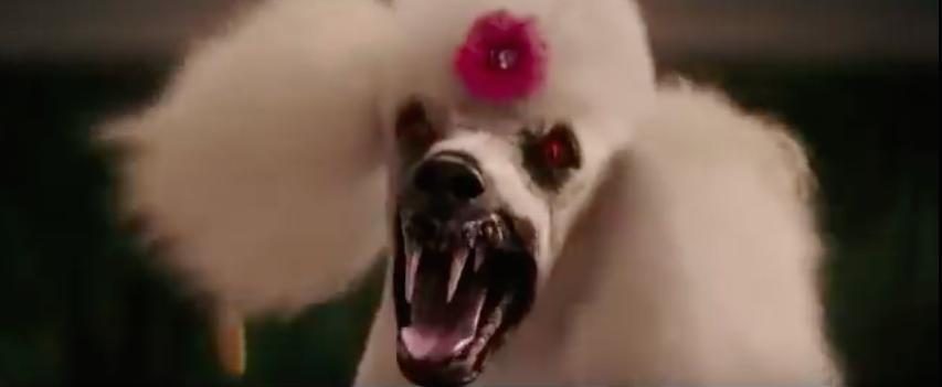 Image result for goosebumps poodle