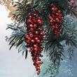 Smokeberry