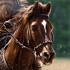 Kingsguard Horse