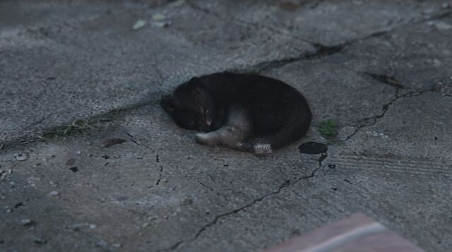 File:CatAsleep-GTAV.jpg