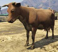 Cow-GTAV