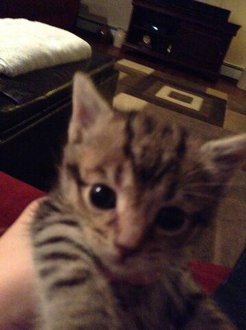 File:Kitty.jpg