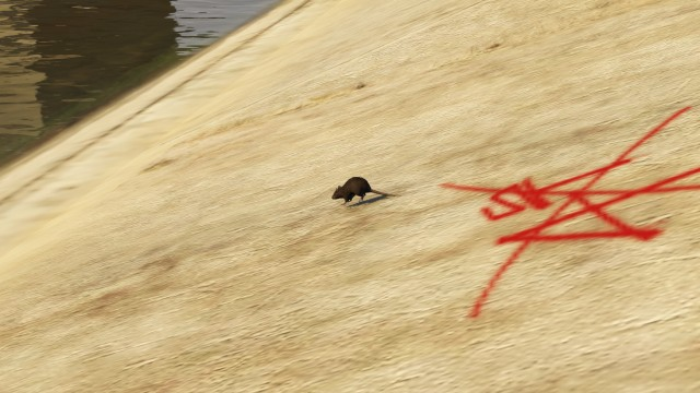 File:Rat-Animal-GTAV.jpg