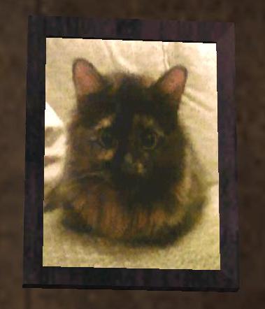 File:SanAn kitten.jpg