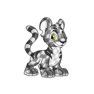 Checkered kougra