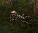 Araignée de mousse