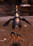 Onyx (pet)
