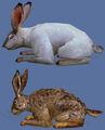 Thumbnail for version as of 11:23, November 10, 2009