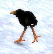 Black Moa Chick