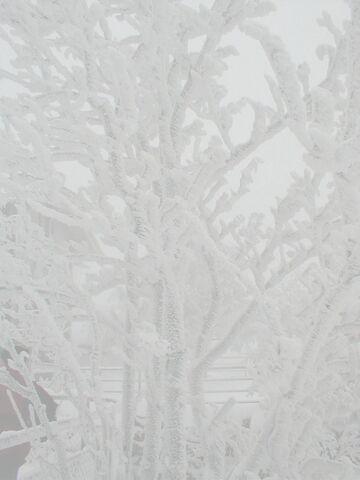 File:Rime ice-bright.jpg