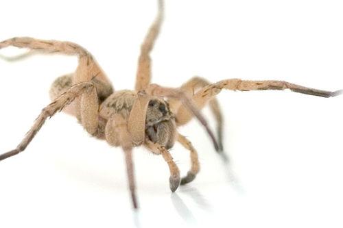 File:SpiderSig.jpg