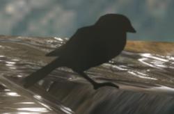 H2A RemnantBird