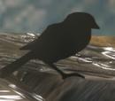 Unnamed bird (Forerunner)
