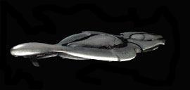 Convenant Cruiser