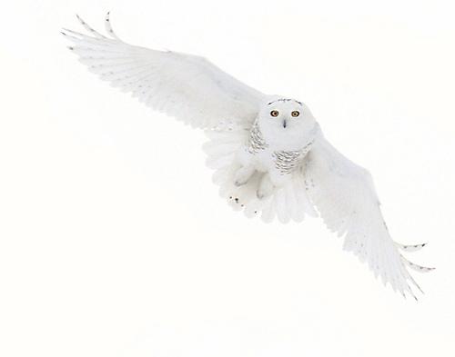 File:Hedwig, wow.jpg