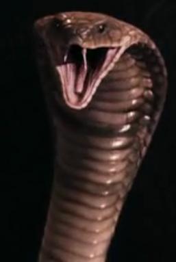 File:Cobra.png