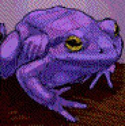 Giant Purple ToadPoA