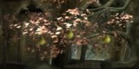Pear (tree)