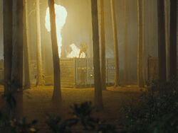 Forestdragons