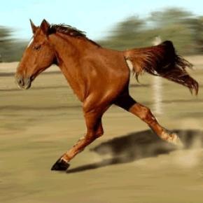 File:Twoleggedhorse.jpg