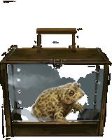 File:Natterjack Toad.png