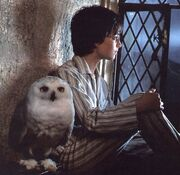 Harry-potter-and-hedwig