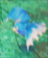 RF4 Thunderbird