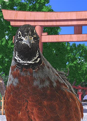 File:Hitoribird.png
