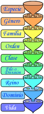 Categorías taxonómicas.png