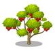 Rambutan Tree