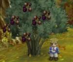 IL Olive Tree