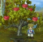 IL Apple Tree