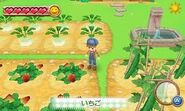 Crops 8