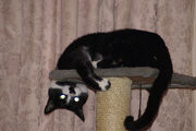 11-27-2007 067 Max going wacko-)