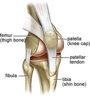 Patellar-tendinitis