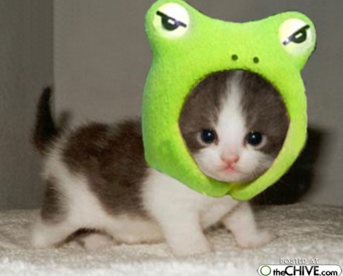 File:Kitty frog.jpg
