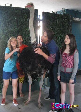 File:Ostrich.jpg