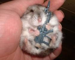 File:Prepare for the Vietnam war 2! Hamster style!.jpg