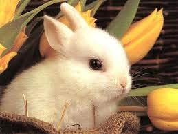 File:Adowable bunny.jpg