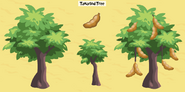 Tamarind tree family