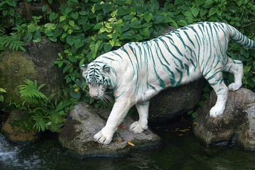 File:Ice Eyed Tiger.jpg