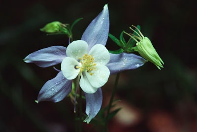 File:Define-columbine-1.jpg